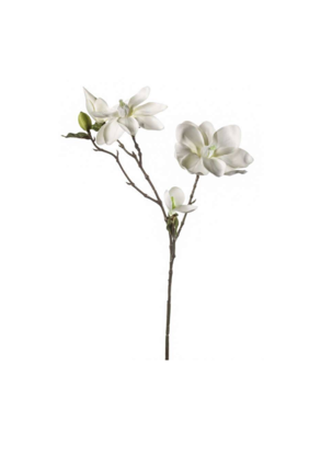 Picture of MAGNOLIJA KREM 75CM
